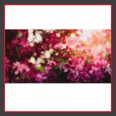 Blumen_Pink_BZB