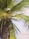 Palmen bei Ihnen zuhause