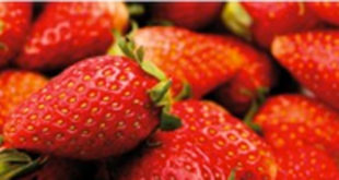 Bauzaunplane für Erdbeerverkauf